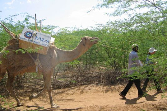 The Camel Mobile Library has been travelling across Kenya for a long time, serving nomadic tribes and helping with literacy. There's a blog about it.  IFLA has written about it. There's even a book about it.