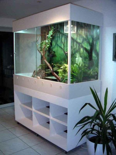 Image Result For How Big Is The Basking Shelf On The Animal Plastics Cages Beardeddragon Reptile Enclosure Reptile Terrarium Bearded Dragon Terrarium Because it's made with a sturdy plastic, you also. pinterest