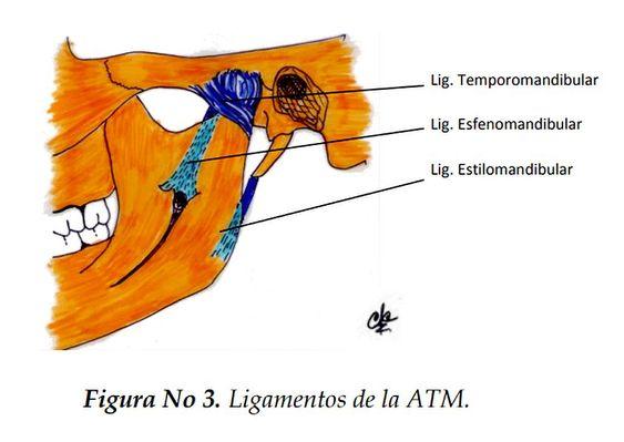 articulación-temporomandibular