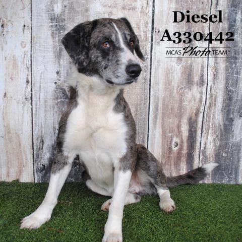 Petharbor Com Animal Shelter Adopt A Pet Dogs Cats Puppies Kittens Humane Society Spca Lost Found In 2020 Animals Animal Shelter Humane Society