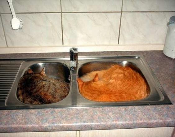 Cats-Dont-Need-a-Bed-8