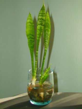 plantas que se puedan sembrar en un jarr n de cristal