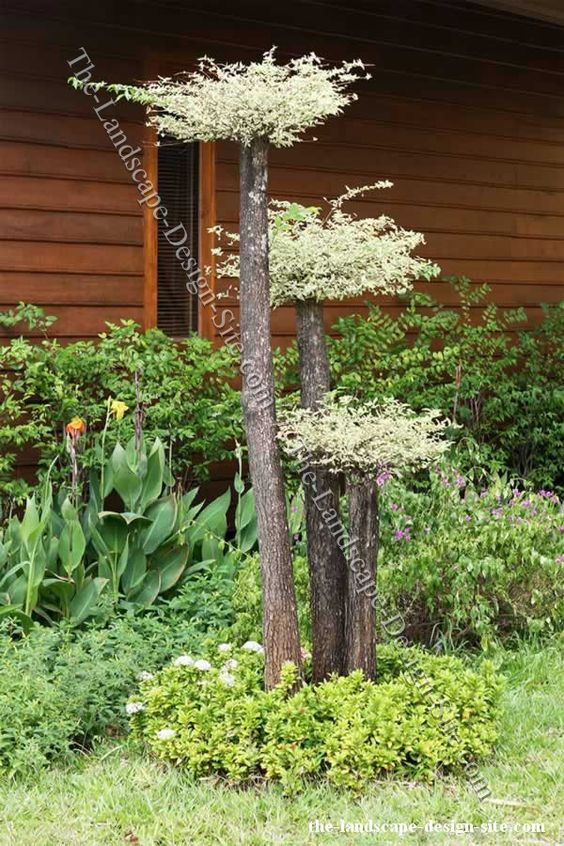 Like the tree trunk bouquet at black dan lake short thick tree trunk with a flower of drift - Home garden decoration ideas ...