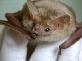 Inviting Bats to Your Yard : Outdoors : Home & Garden Television