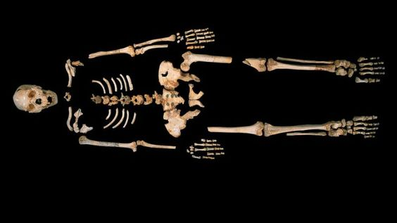 400,000-year-old Sima de Los Huesos human, found in a deep cave in northern Spain.