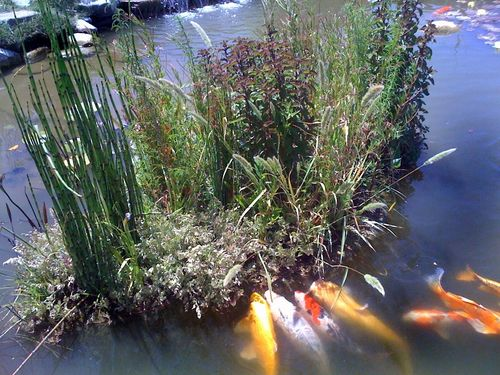 Pinterest the world s catalog of ideas for Floating fish pond