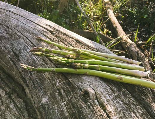 Early Spring Is The Time To Stalk Search And Forage For Wild Asparagus Check Out This Post For How To Find Wild Asparagus Pl Asparagus Foraging Spring Grass