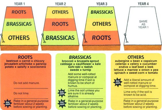 crop rotation chart: Vegetable families and crop rotation crop rotation gardens and