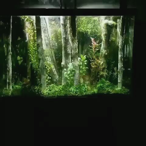 Driftwood For Aquariums Aquarium Landscape Tropical Fish