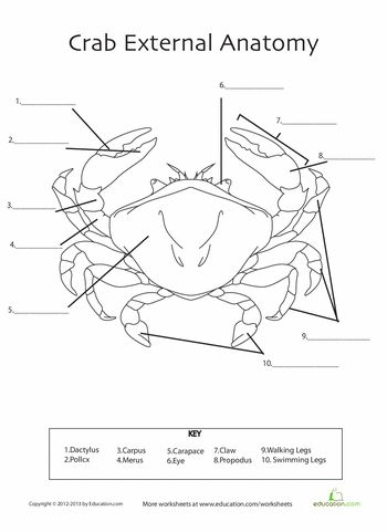Crab Anatomy | Anatomy, Crabs and Worksheets