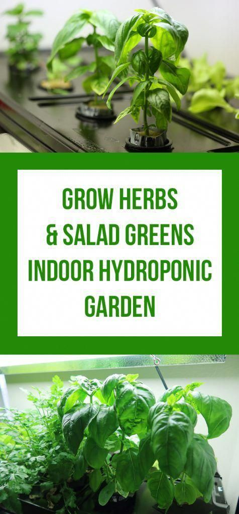 Indoor Hydroponic Garden Cheap And Easy Beginner Tutorial Hydroponic Gardening Indoor Vegetable Gardening Hydroponics