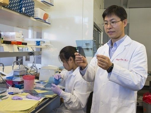 MicroRNA Pathway Could Lead to New Avenues for Leukemia Treatment