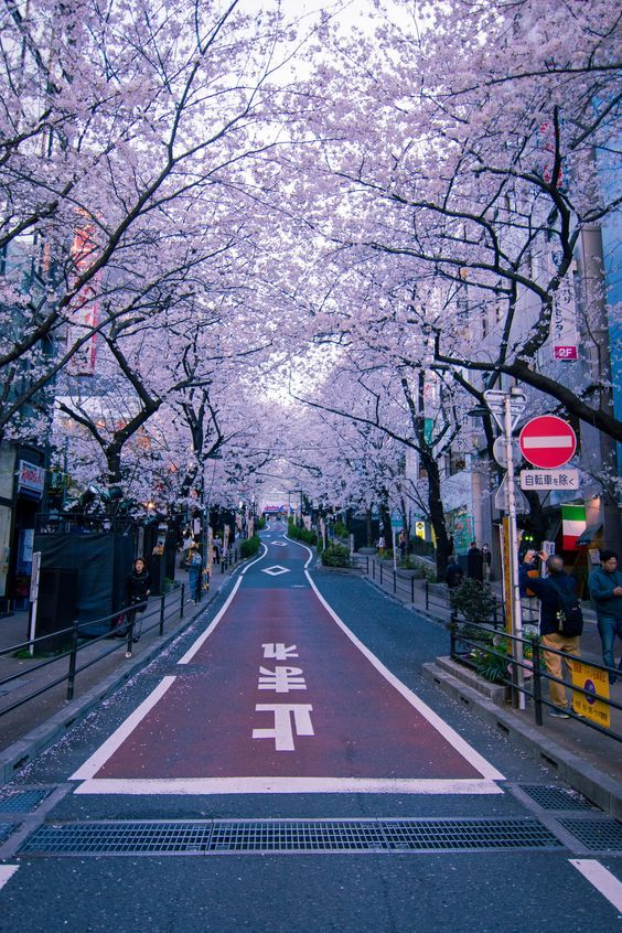 20 Best Places To Visit In Japan Bafbouf Japan Travel Photography Aesthetic Japan Japan Photography