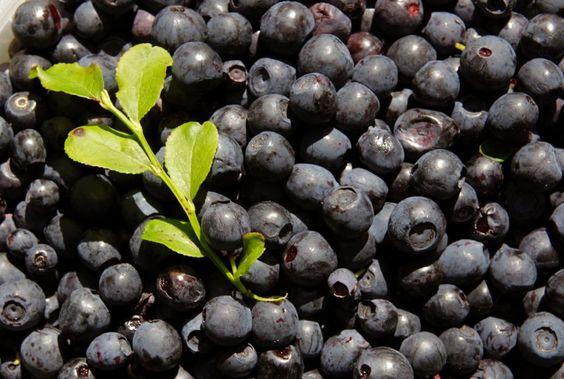 Drei Portionen Blaubeeren und Erdbeeren pro Woche sollen genügen, um das Herzinfarkt-Risiko deutlich zu senken. Das besagt eine US-Studie, die bestimmte Antioxidantien für die Schutzwirkung verantwortlich macht. Doch welche Heilskraft steckt wirklich in den Beeren?