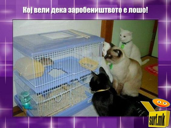 Кој вели дека заробеништвото е лошо! http://surf.mk/