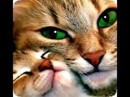 Resultado de imagen para gatos tiernos