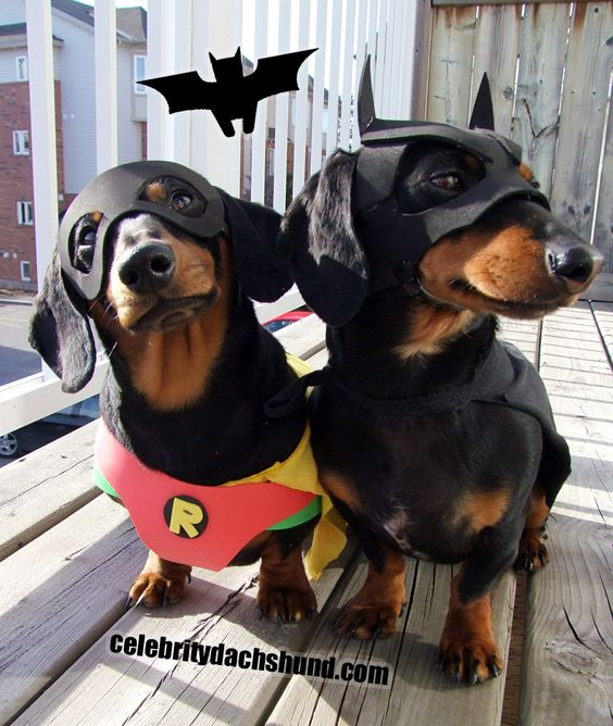 BATDOG and Robin Sausage dogs- i want them!!!! x