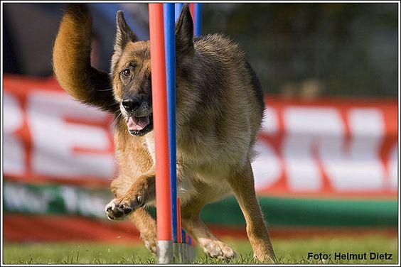 Verein für Deutsche Schäferhunde (SV) Agility Bundesliga Nord - OG Anrath