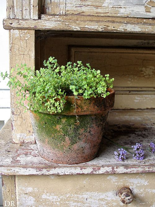 Moss growing on an old terracotta pot.: