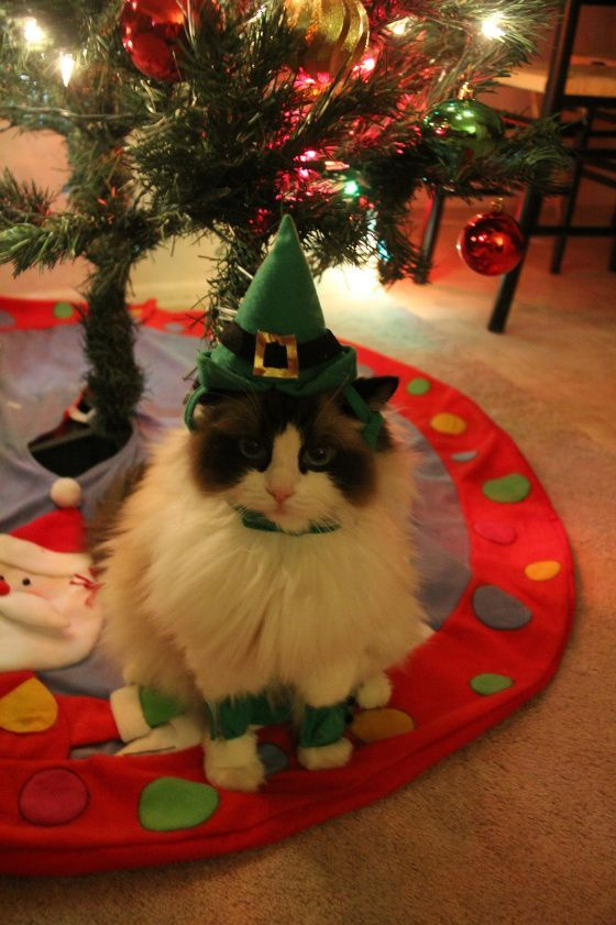 Kittens Christmas Outfits 20 Christmas Costumes For Cats Christmas Cats Cat Costumes Christmas Dog