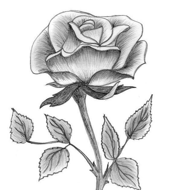 Wow 27 Sketsa Gambar Bunga Yg Mudah 40 Gambar Sketsa Bunga Indah Mawar Matahari Tulip 39 Gambar Sketsa Bunga Indah Sakura Mawar M Di 2020 Bunga Bunga Teratai Gambar