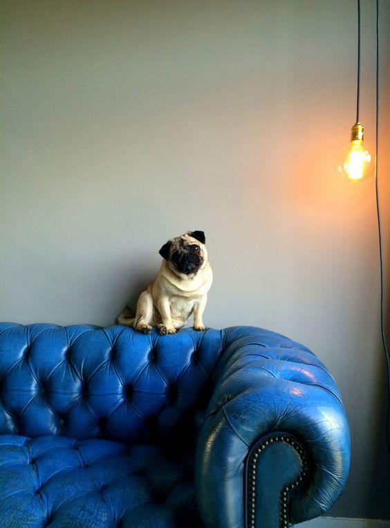4 tips para vivir con mascotas| Me lo dijo Lola