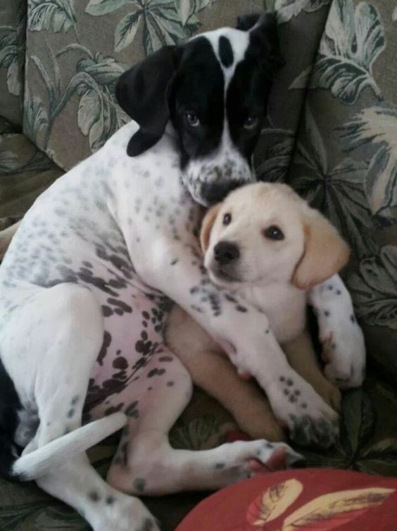 These cuddle buddies. | 19 Puppy Best Friends Because The World Doesn't…
