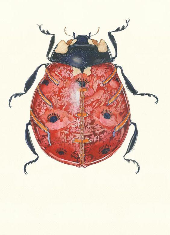 Daniel Mackie - Ladybird