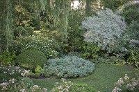 Massifs et potées - Plantes à feuillage panaché pour massif mi-ombragé