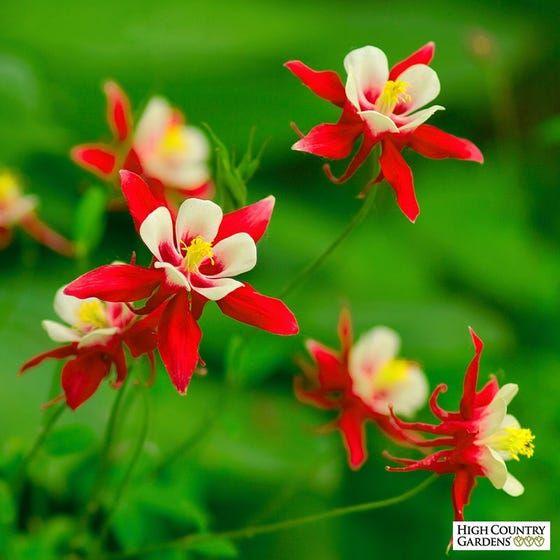 Pin On Favorite Plants