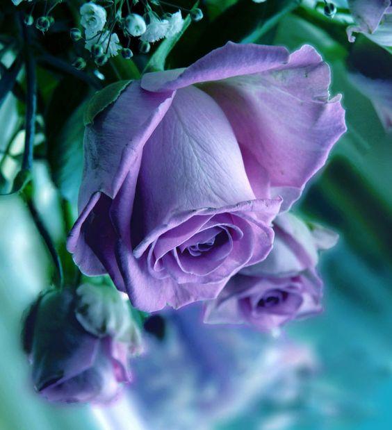 Purple roses...my favorite.