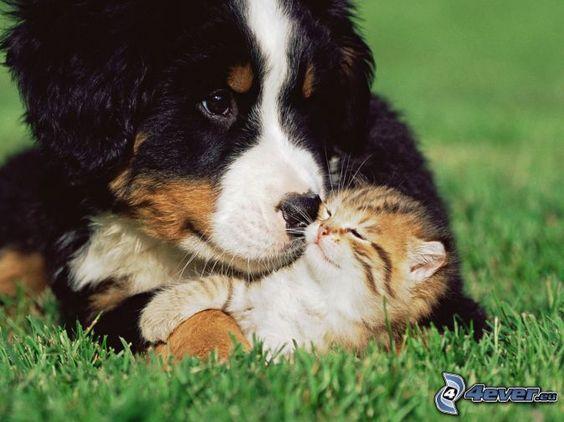 Perro y gato juntos.