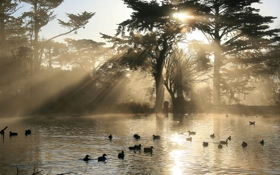 Crepuscular rays over duck pond