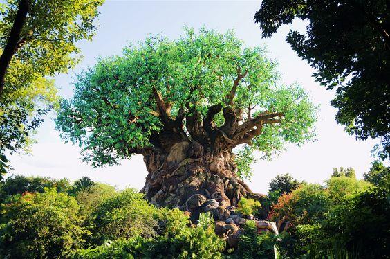 Tree of Life animal kingdom | Tree of Life, Animal Kingdom, Disney
