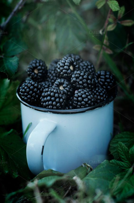 Check out The pickling of blackberries by TheNatureShop on Creative Market:
