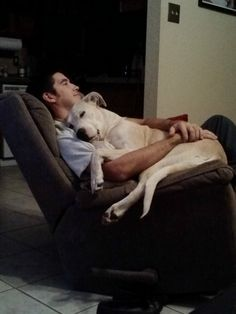 I guess she could be considered a lap dog - Imgur