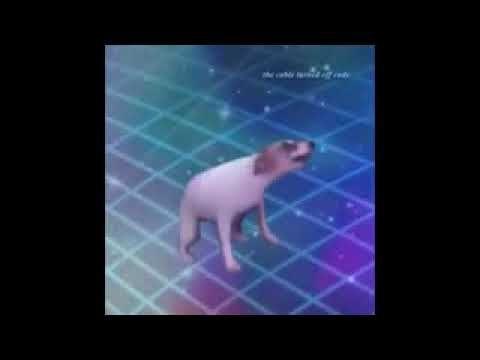 Perro Bailando Meme Youtube In 2021 Memes Youtube