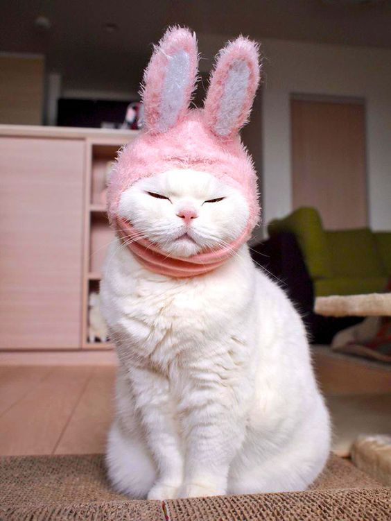 Découvrez le chat Ura, 17 ans, nouvelle star Internet du Japon