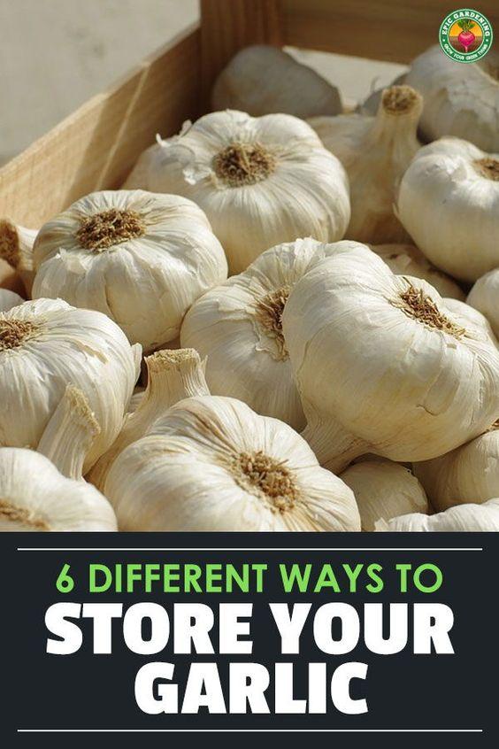 Can Garlic Go Bad Garlic Fresh Garlic Raw Garlic