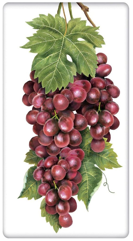 Vineyard Grapes 100% Cotton Flour Sack Dish Towel Tea Towel: