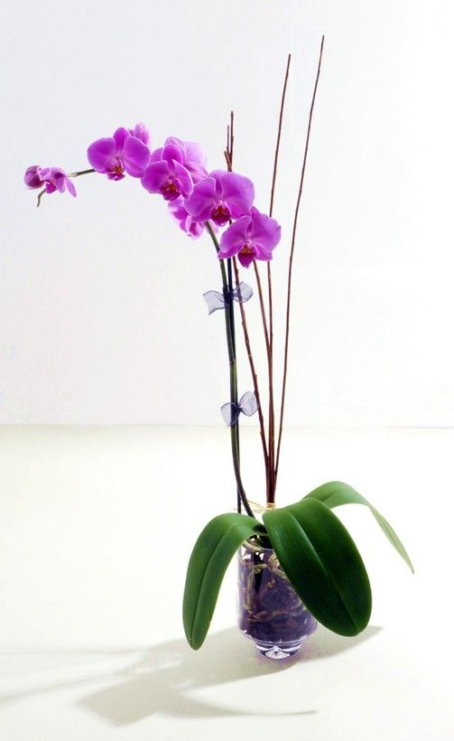 orchids! orchids! orchids! - love them, but can't get them to bloom!  Will grown very big, but never no blooms!