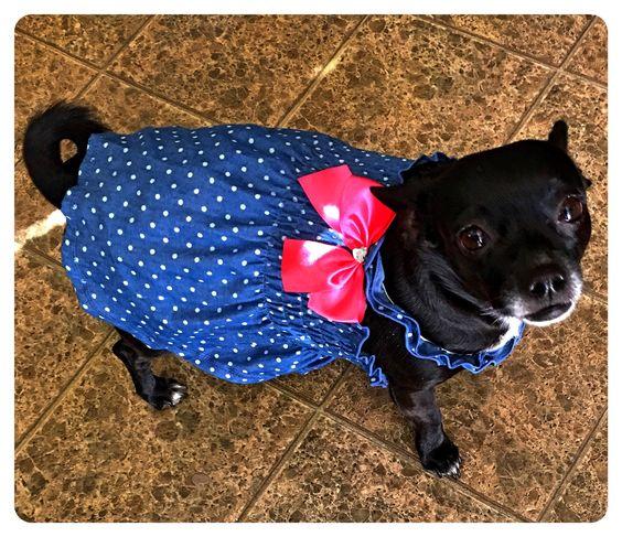 Chihuahuas like to dress up too!