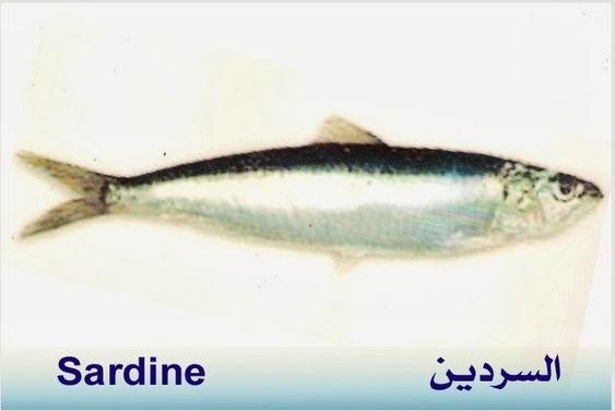 تعريف اسماء الاسماك بدلجة المغربية و الفرنسية البحار المغربي Fish Sardine Blog Posts