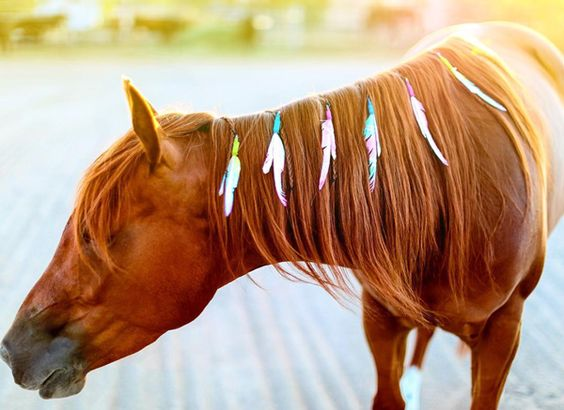 Want to stand out in the arena? Unique Unicorn Feathers can help your horse look good.
