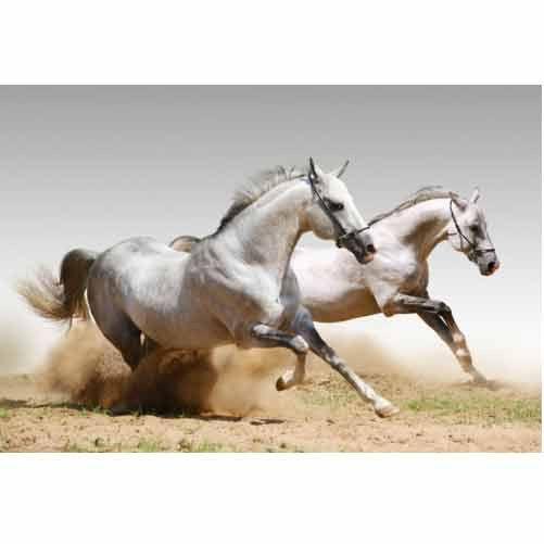 fototapete pferde tapete wandbild | zimmer mia | pinterest | cars