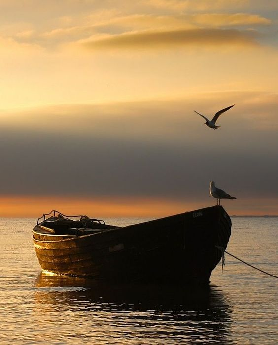 Le froissement des ailes, le clapotis de l'eau, la brise qui fait frissonner la mer ...