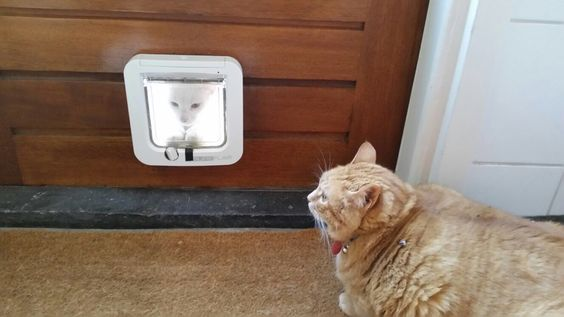 Aliens are among us - http://ift.tt/29KELz0 - #cat #kitty #kitten #cute #funny #aww #adorable #cats