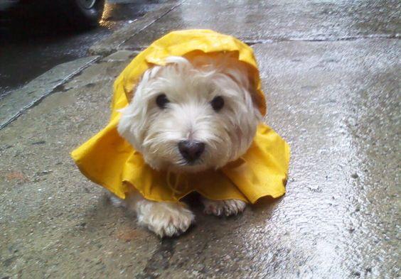 So ein niedlicher Schatz, was haben sie dir für ein Regen-Cape angezogen? NOT macht erfinderisch! ☔😊☔