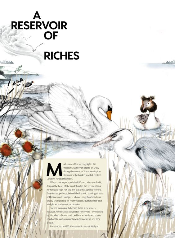 Jove Magazine  Illustration for Jove Magazine, for an article about the fantastic bird reservoirs of Hackney. Made in 2014.