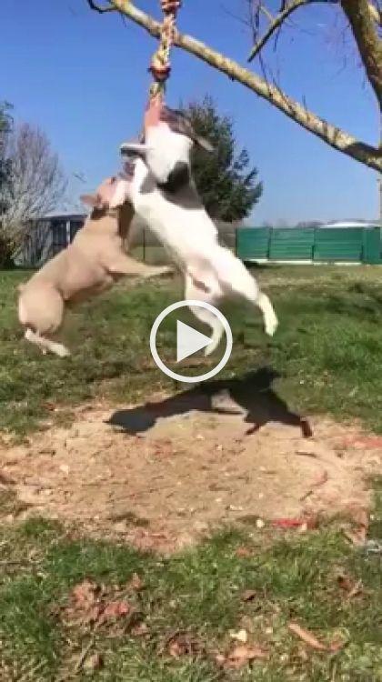 Jogos legais para cães